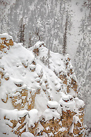 A white mantle of snow covers the canyon rims overlooking Yellowstone's Grand Canyon