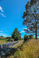 Stage one of the 2018 NZ Cycle Classic UCI Oceania Tour (Masterton-Alfredton-Masterton) in Wairarapa, New Zealand on Wednesday, 17 January 2018. Photo: Dave Lintott / lintottphoto.co.nz