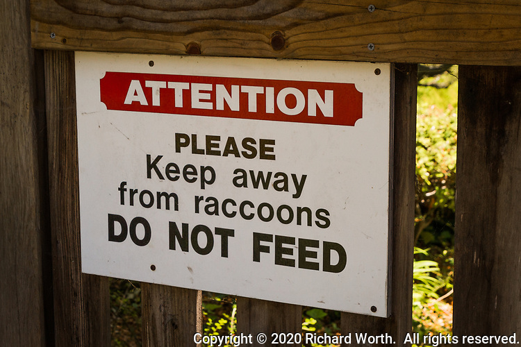 A warning sign at the entrance to the Japanese Garden in Hayward, California, warning visitors to keep away from raccoons and not to feed them.