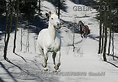 Bob, ANIMALS, collage, horses, photos(GBLA731,#A#) Pferde, caballos