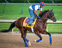 Went the Day Well, trained by Graham Motion and to be ridden by John Velazquez, works out in preparation for the 138th Kentucky Derby at Churchill Downs in Louisville, Kentucky on May 3, 2012