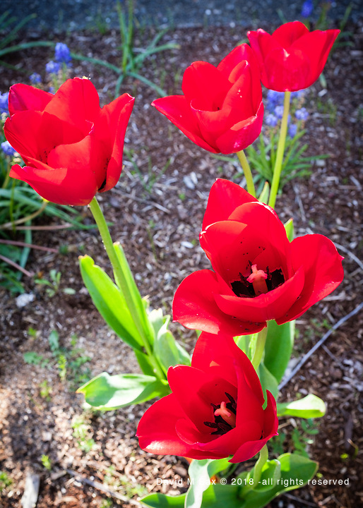 4.21.17 - Red & a Touch of Green...