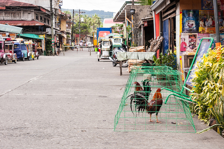 View of a Sampaloc street from the open sidecar of a tricycle.  Individual homes mix with shops and stalls on both sides of the street.  The chickens (actually, fighting cocks) in foreground are for sale.  Cockfighting is quite popular in the Philippines.  (Sampaloc, Quezon Province, the Philippines)