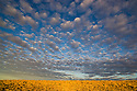 Australia, South Australia;  clouds over grassland south of Lake Eyre