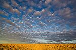 Australia, South Australia;  clouds over grassland south of Lake Eyre