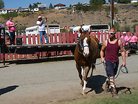 Hector ridden by Brandon Meise enters the Calcutta and recieves a bid of $40. The World Famous Suicide Race at the Omak Stampede in Omak, Wash. on August 16, 2015. (photo © Karen Ducey)