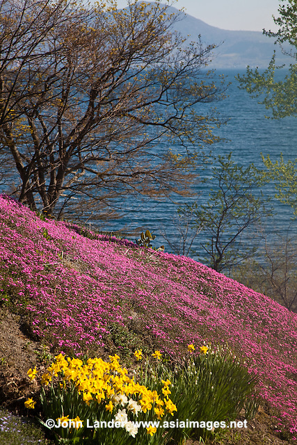The winter is long and severe in Japan's northermost islands like Hokkaido.  To celebrate spring and summer, residents set up elaborate flower gardens.