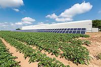 Solar panels providing electricity for potato storage - Lincolnshire, June