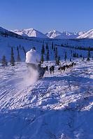M Buser Mushing on Trail Rainy Pass Area Iditarod 99 AK