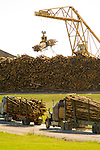 Log truck delivery and cold deck with Pine Tree logs