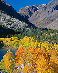 Inyo National Forest, CA; Aspen in fall color along the upper edge of Lundy Lake in the Eastern Sierras