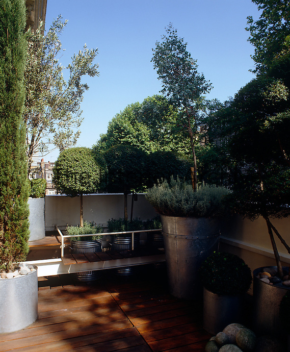 Dustbins and zinc tubs have been used as planters for trees and shrubs on the wooden deck of this city roof terrace