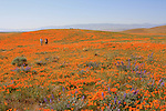 Hikers at the Antelope Valley California Poppy Reserve