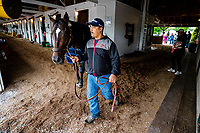 LOUISVILLE, KENTUCKY - MAY 03: McCraken, owned by Whitham Thoroughbreds LLC and trained by  Ian R. Wilkes,  is walked in his barn after exercising in preparation for the Kentucky Derby at Churchill Downs on May 3, 2017 in Louisville, Kentucky. (Photo by Douglas DeFelice/Eclipse Sportswire/Getty Images)