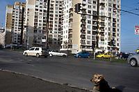 BULGARIA, Sofia, 2012/04/5..A stray dog ??sits on the floor in the district of Lyulin Sofia, Bulgaria..BULGARIE, Sofia, 2012/04/5..Un chien errant est assis dans sur la chaussée du quartier de Lyulin à Sofia, Bulgarie..© Pierre Marsaut