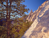 Tent Rocks Nat'l Monument, NM  /<br /> Ponderosa pine and cone shaped rocks of eroded volcanic ash in Peralta Canyon<br /> Kasha-Katuwe Tent Rocks National Monument