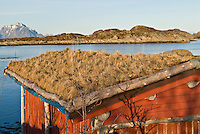 Traditional grass roofed building, Lofoten, Norway