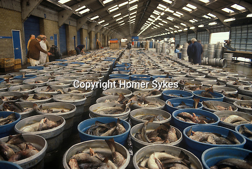Fleetwood Lancashire UK fishing industry morning catch. 1980s The catch will be auctioned off.