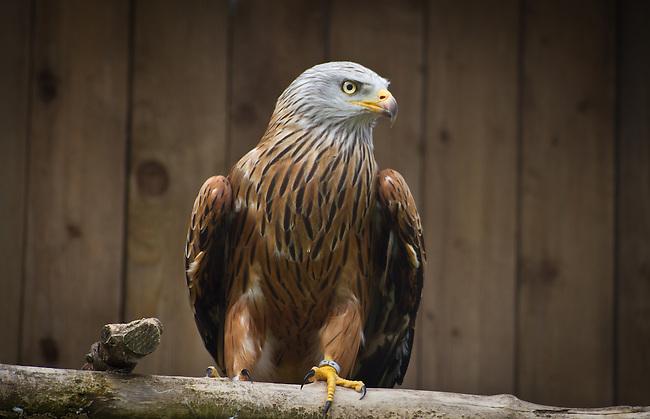 Importance, bird of prey
