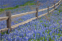 Each spring I return to this spot outside of Llano, Texas. I love the old fencepost. Most years, it is surrounded by Texas bluebonnets and even a few Indian paintbrush. This year was no exception.