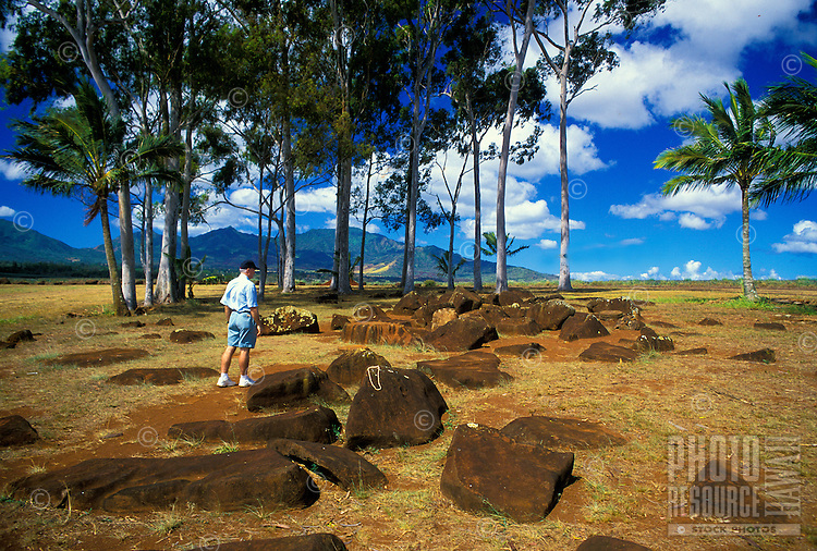 Surrounded by a grove of palm trees, the Kukaniloko Birthstones State Monument is located north of the town of Wahiawa in Oahu's central plateau. Hawaiian Alii (royalty) gave birth here.
