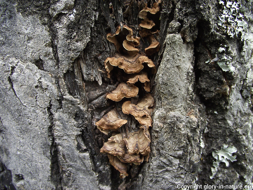Fungus nestled in the crevices of the bark of this tree.