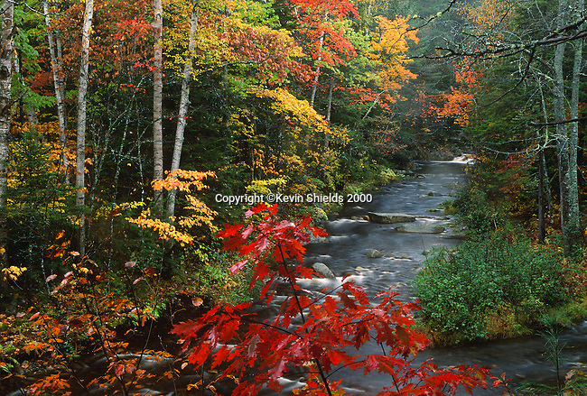 Fall view of Chandler Mill Stream , Township E, Maine, USA