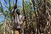 Cuba/Env La Havane: Coupeur de la canne à sucre à la Guanabito Farm
