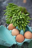 """Gastronomie Génréale / Diététique: Ornithogalum pyrenaicum, Ornithogale des Pyrénées, <br /> FamilleAsparagaceae<br /> L'Ornithogale des Pyrénées , appelé aussi Asperge des bois ou encore Aspergette  est une plante herbacée vivace de la famille des Liliacées selon la classification classique ou des Asparagacées selon la classification phylogénétique. Les jeunes pousses sont comestibles d'où les noms « asperge des bois » ou « aspergette » qui lui sont donnés dans certaines régions.  // General / Diet Gastronomy: Ornithogalum pyrenaicum, Ornithogale des Pyrénées,<br /> Family Asparagaceae<br /> The Ornithogale of the Pyrenees, also called Wood Asparagus or Aspergette is a perennial herbaceous plant of the Liliaceae family according to the classic classification or Asparagaceae according to the phylogenetic classification. The young shoots are edible, hence the names """"asparagus des bois"""" or """"aspergette"""" which are given to it in certain regions. // General / Diet Gastronomy: Ornithogalum pyrenaicum, Ornithogale des Pyrénées,<br /> Family Asparagaceae<br /> The Ornithogale of the Pyrenees, also called Wood Asparagus or Aspergette is a perennial herbaceous plant of the Liliaceae family according to the classic classification or Asparagaceae according to the phylogenetic classification. The young shoots are edible, hence the names """"asparagus des bois"""" or """"aspergette"""" which are given to it in certain regions."""