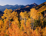 Autumn aspens, North Fork Provo River Canyon, Provo Peak, Wasatch Mountains
