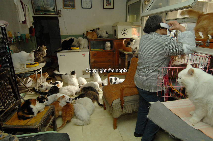 Ding Shi Rong, 80, with some of the 250 (two hundred and fifty) cats that she keeps in her walled Hutong home.  <br /> Ding Shi Rong's home acts as a shelter for abandoned cats, which are being collected from the streets and taken to Government compounds where they slowly die.