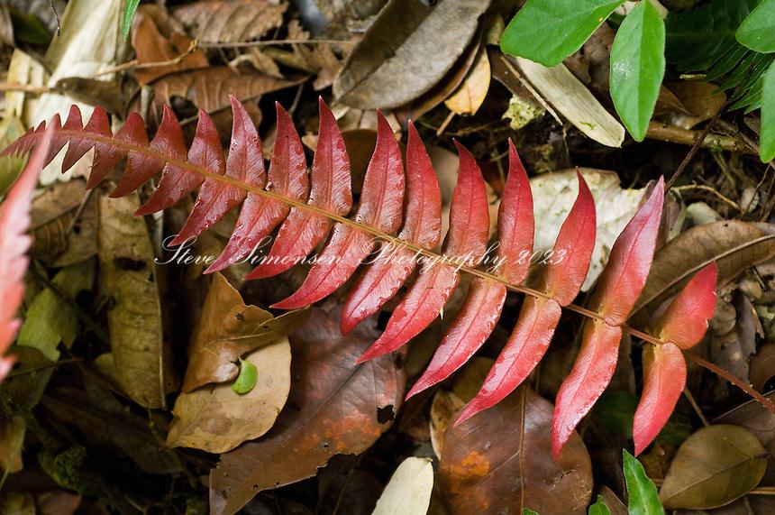 Sage Mountain National Park foliage<br /> Tortola, British Virgin Islands