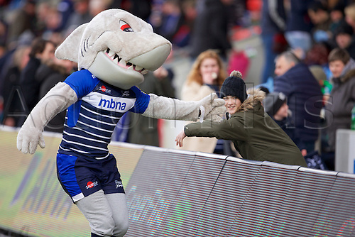 05.03.2016. AJ Bell Stadium, Salford, England. Aviva Premiership. Sale versus Harlequins. Sale mascot Sharky give a high 5 to a fan.
