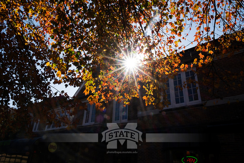 Fall leaves at pavilion near Moe's and Subway.<br />  (photo by Megan Bean / &copy; Mississippi State University)