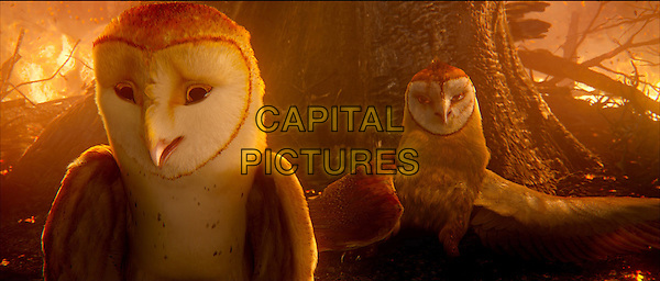 Soren, voiced by JIM STURGESS and Kludd, voiced by RYAN KWANTEN .in Legend of the Guardians: The Owls of Ga'Hoole.*Filmstill - Editorial Use Only*.CAP/FB.Supplied by Capital Pictures.