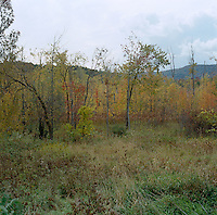 A view across woodland to the hills of New Mexico