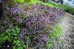 Schlafly Gardenworks
