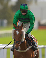 Hit The Highway ridden by Tom Cannon and trained by Chris Gordon during Horse Racing at Plumpton Racecourse on 4th November 2019