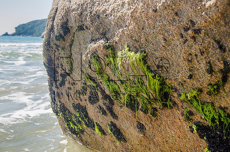 Musgos em rocha na Praia do Cachadaço, Vila de Trindade - Paraty- RJ, 12/2013.