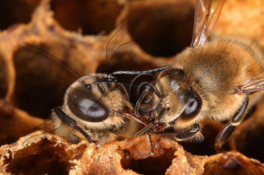 how to get started with honey bees