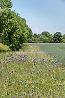 27.5.2020 Wild flower margin <br /> ©Tim Scrivener Photographer 07850 303986<br />      ....Covering Agriculture In The UK....