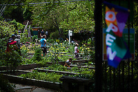 People works in a community garden organized to produce organic food at Brooklyn in New York,  May 10, 2013, Photo by Eduardo Munoz Alvarez / VIEWpress.