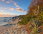 Virgin Gorda, British Virgin Islands, Caribbean<br /> Evening light on yuccas and cactus on the beach of Little Trunk Bay near the Baths