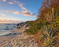 Virgin Gorda, British Virgin Islands, Caribbean<br /> Evening light on yuccas and cactus on the beach of Little Trunk Bay near the Baths