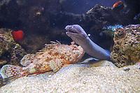 Muränen und Fische im Aquarium von Palma de Mallorca - Palma de Mallorca 26.05.2019: Aquarium von Mallorca in Plama