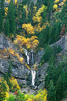 792800029 trees adorned in the yellow and oranges of fall surround a small waterfall draining down a cliff face in provo canyon in utah