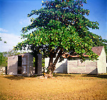 Almond tree and old wooden outhouse sheds, Cayman Brac, Cayman Islands,