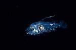 Fish ID Plz 4-26-19-5382cr