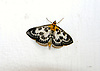 Moth on white wall