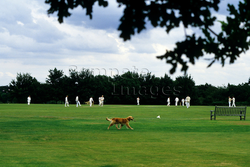 Dog walking past a cricket match